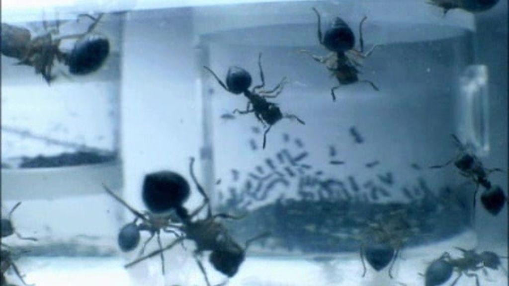Promo El hormiguero: ¡Ya vuelven!
