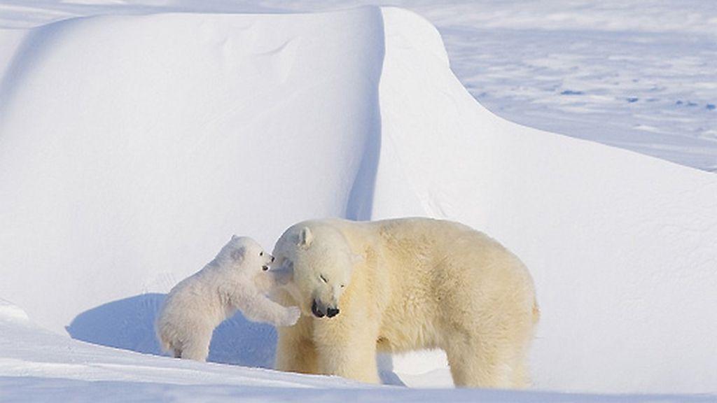 Así son los abrazos de oso