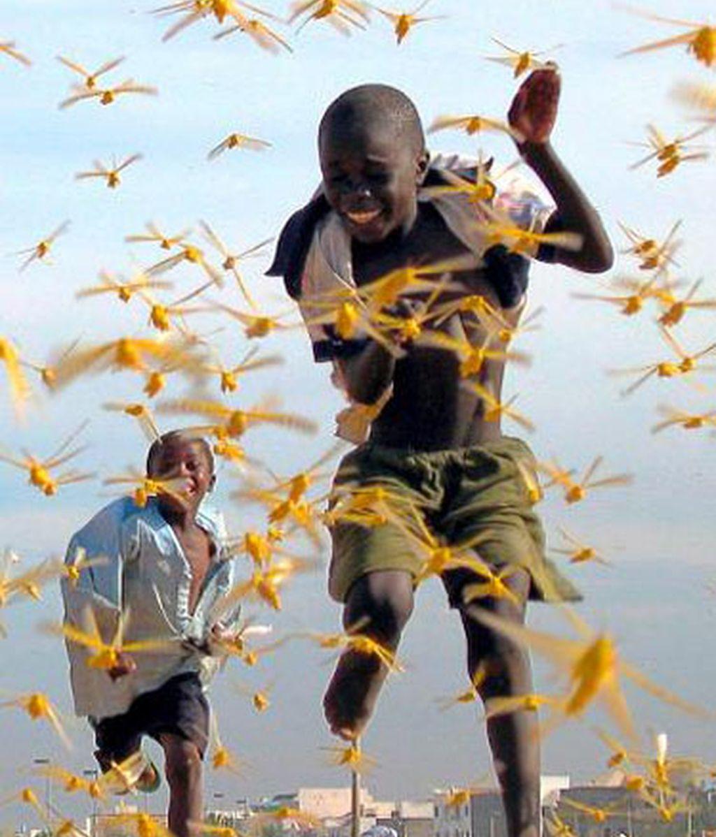 Niños senegaleses corren entre una plaga de langostas
