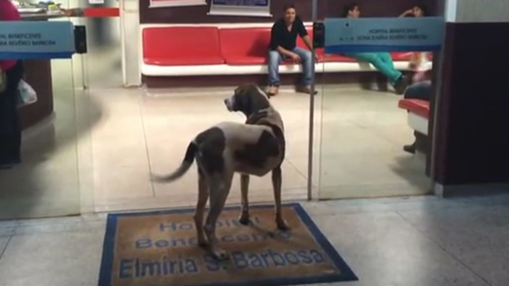 Un perro permanece 8 días esperando a las puertas del hospital donde falleció su dueña
