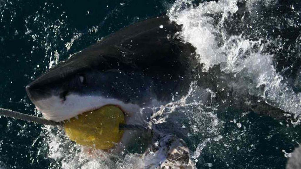 Jesús Calleja :Tiburón Blanco