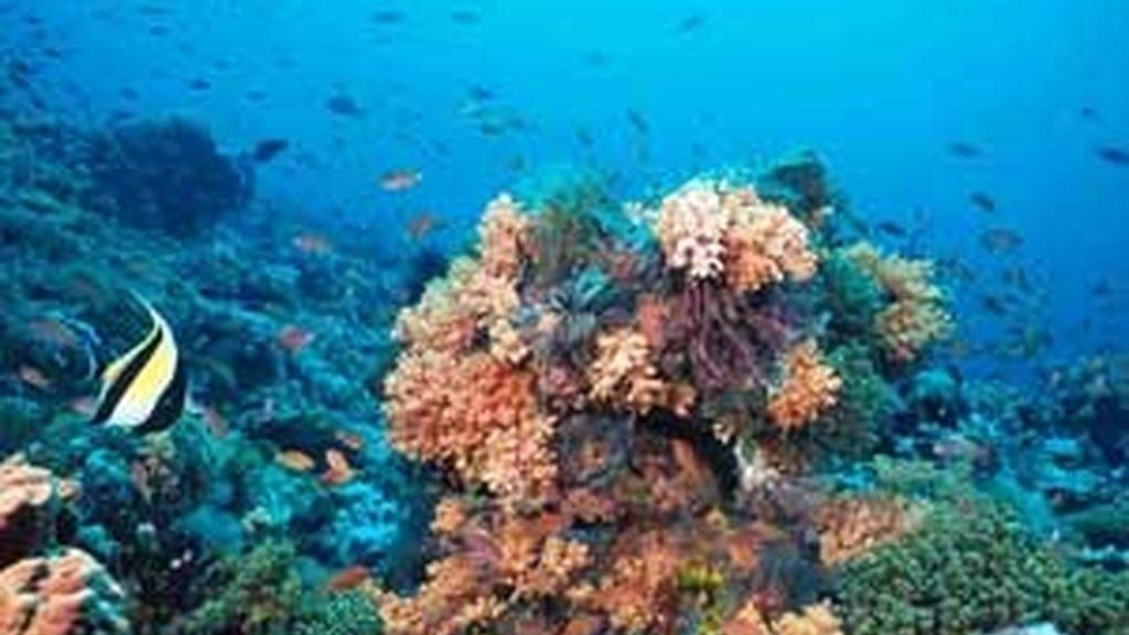 Los científicos aspiran a que los fondos marinos dejen de ser los grandes desconocidos.
