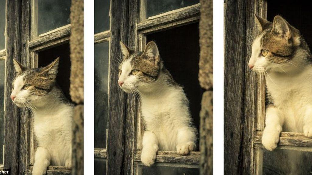 Mirando a través de la ventana en tres instantáneas