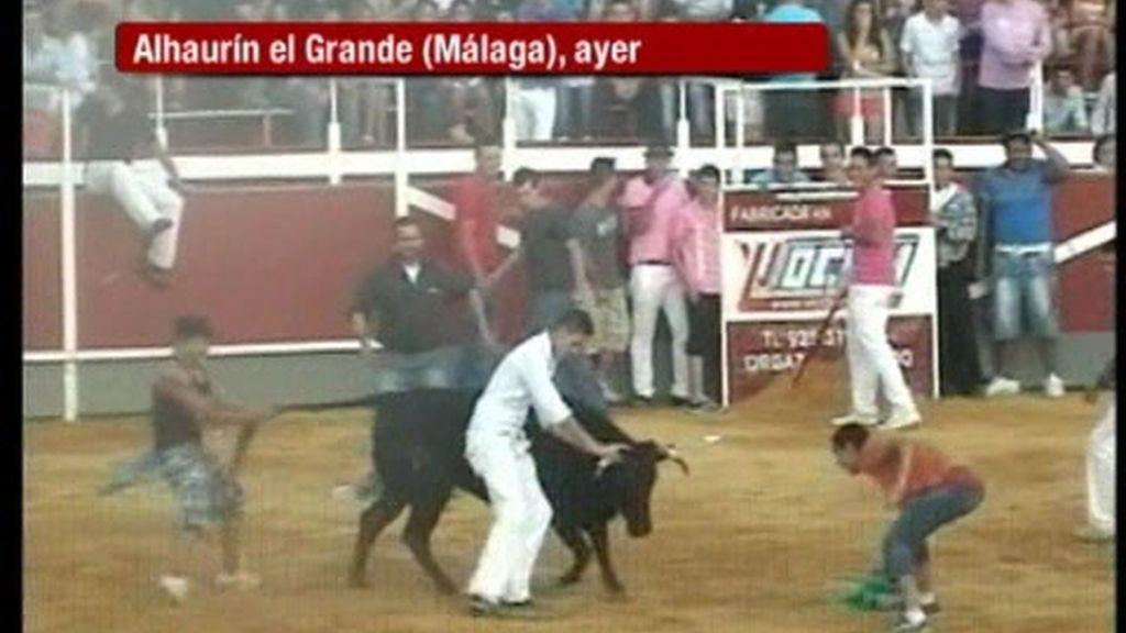 Un grupo de salvajes tortura a una vaquilla en Alhaurín (Málaga)