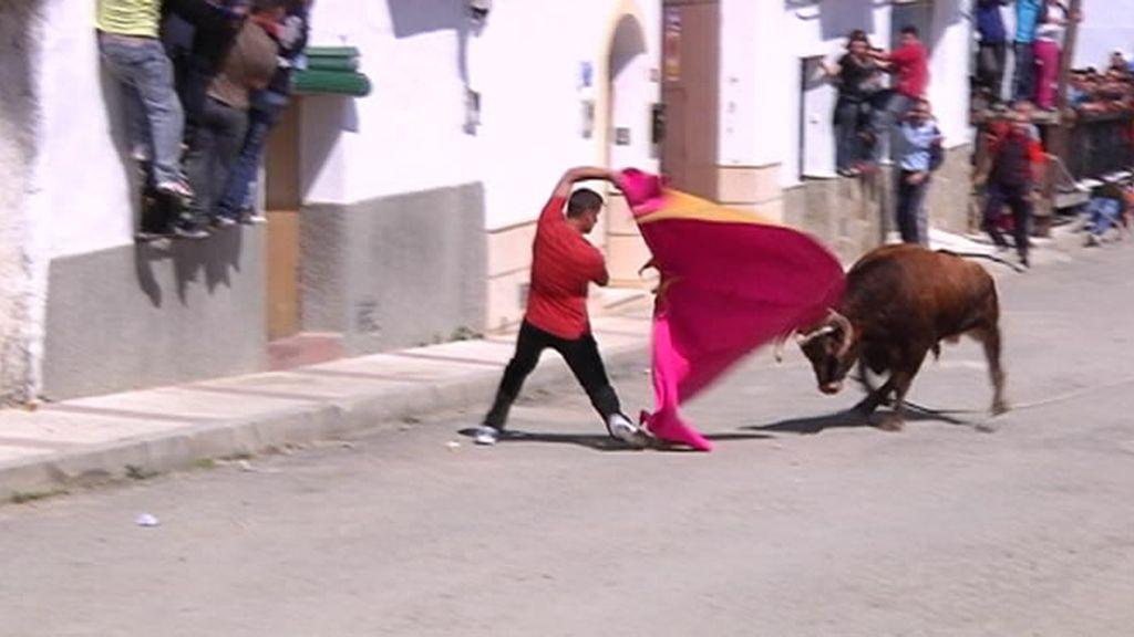 Capote en Gaucín (Málaga)