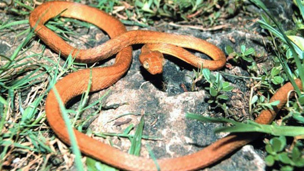 Dos raras serpientes procrean en cautividad en el zoo de Moscú