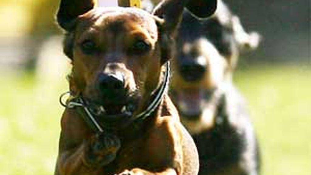 En Maçalet de la Selva no podrá haber más de seis animales en un mismo piso. Foto archivo EFE.