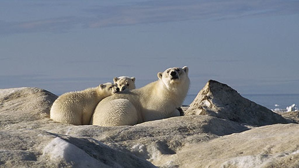 'Los reyes del Ártico'