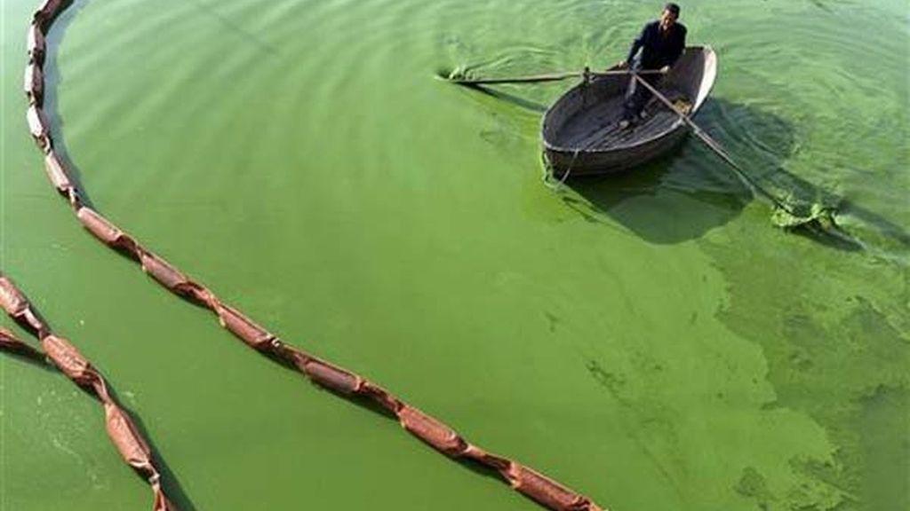 Entre aguas verdes