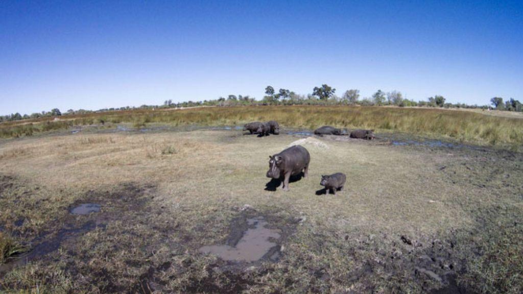Las imágenes de Paul Souders en un parque natural de Bostwana