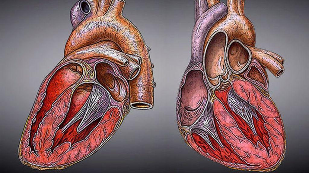 Impresión en 3D directa al corazón