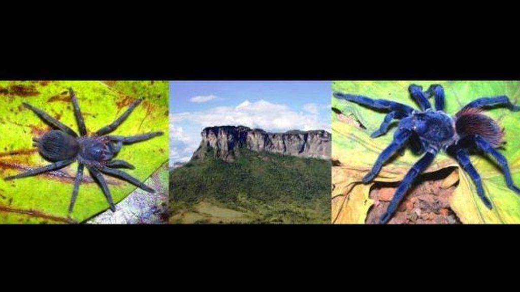 Las 10 especies más extrañas descubiertas en 2011