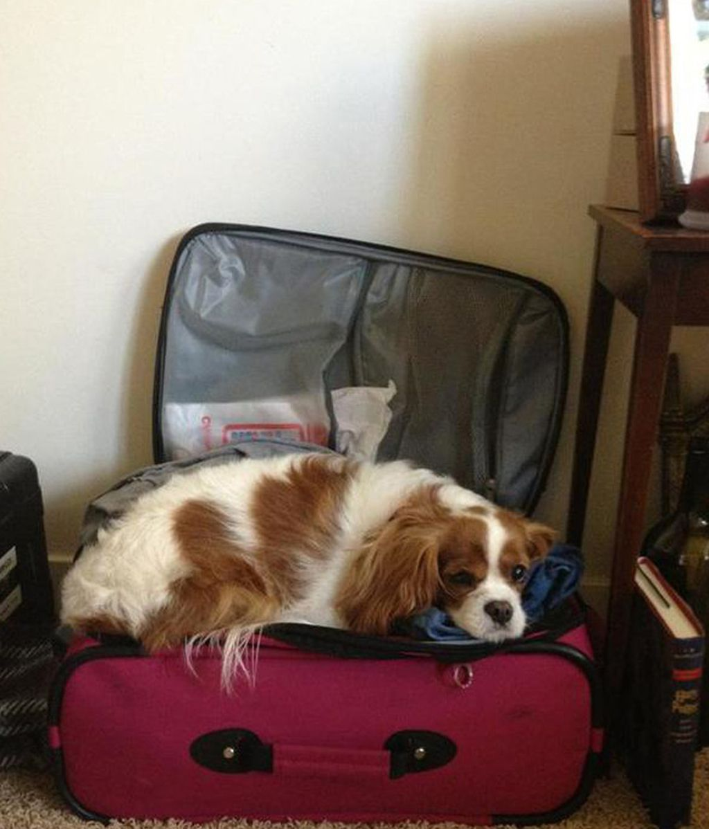 Mascotas viajeras