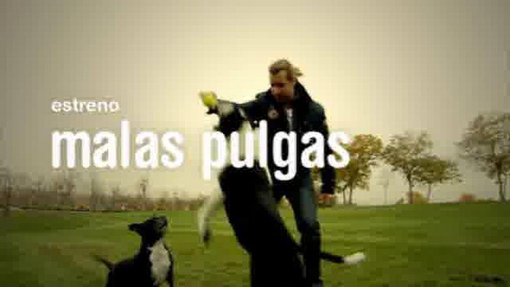 Borja Capponi le va a quitar a tu perro las 'Malas Pulgas'