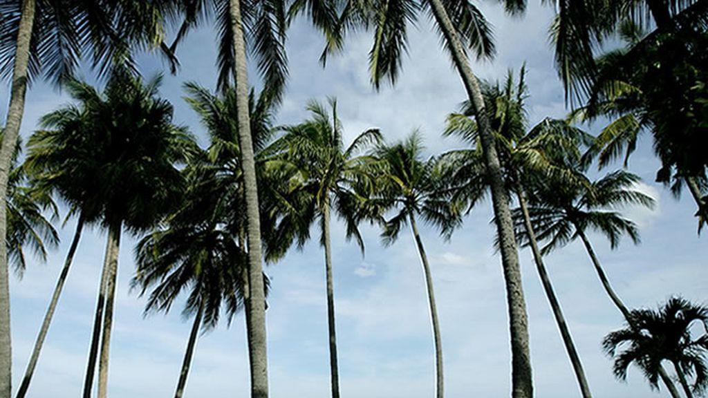 """La paradisíaca """"Playa Grande"""", en Costa Rica"""