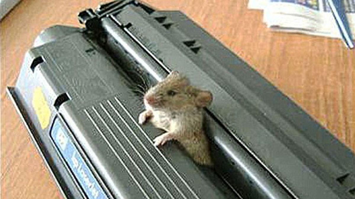 El ratón que atascó una impresora