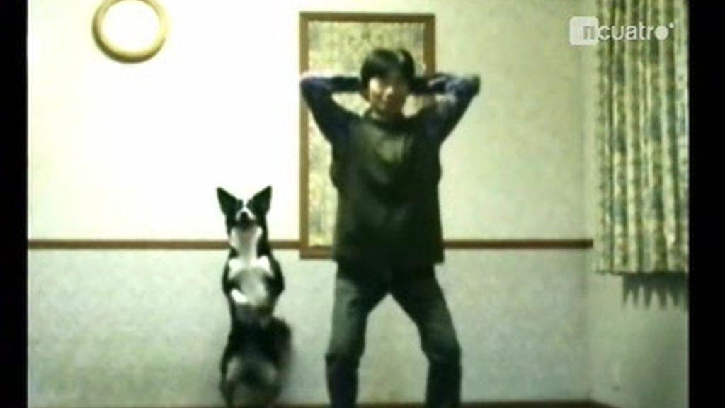 Ejercicio canino