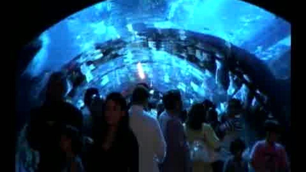 Se rompe el 'mega-acuario' de Dubai