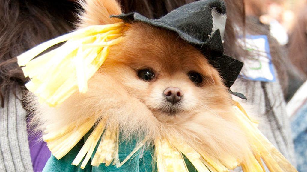 Disfraces perrunos para Halloween