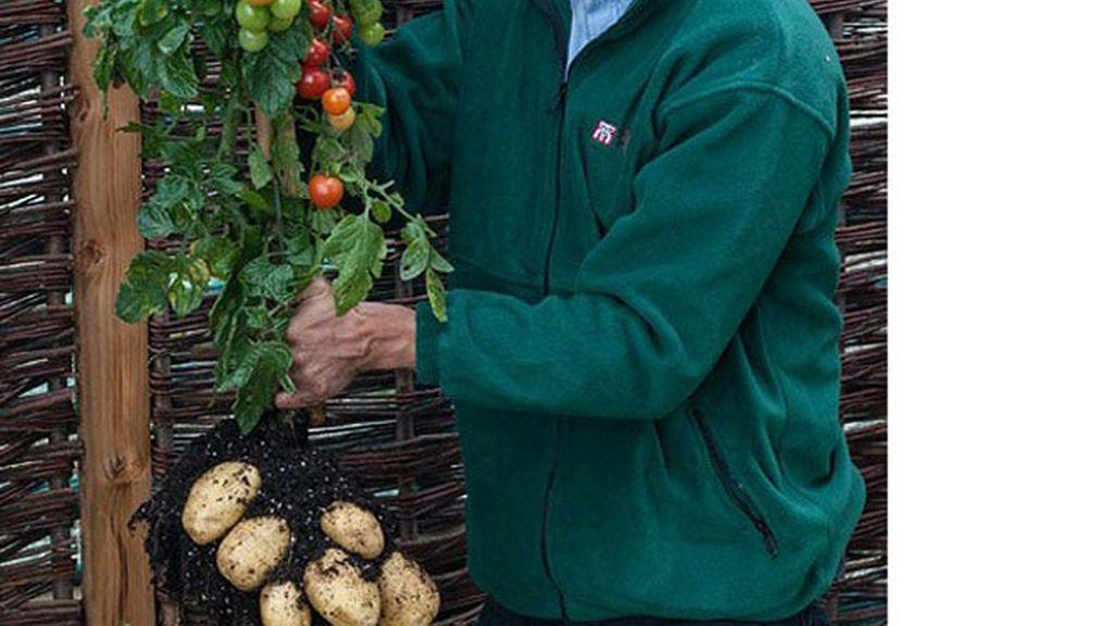 Tomate y patata en la misma planta y cosecha