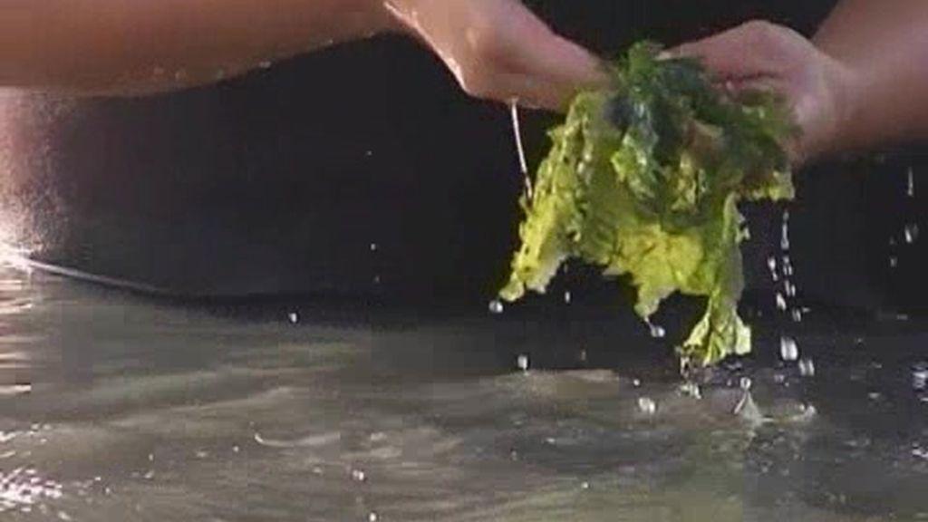El negocio de las algas
