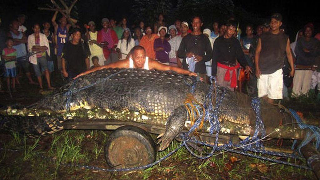 Capturan vivo a un cocodrilo gigante en Filipinas