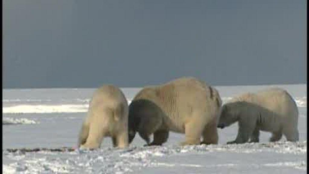 Alaska, en el objetivo de BP