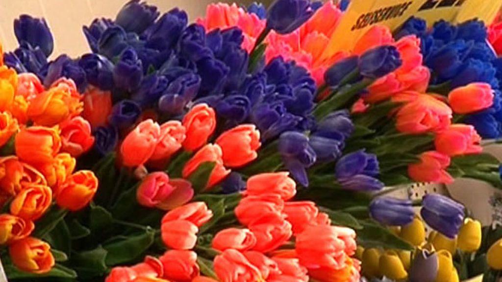 Holanda, el país de los tulipanes