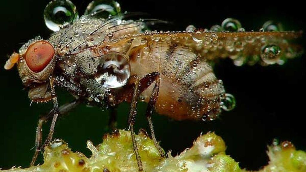 Muchos insectos nu duermen