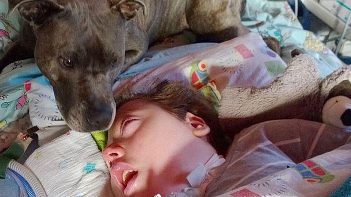 Clamor en Alemania para no separar a un perro del niño en coma al que cuidó seis años
