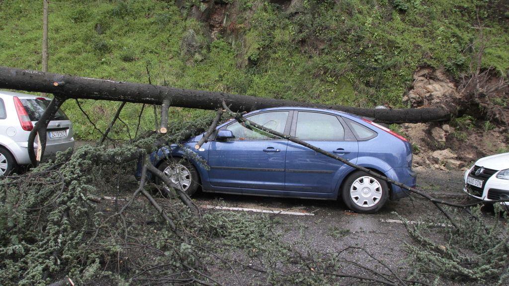 La ciclogénesis explosiva causa destrozos en el monte del Castro en Vigo