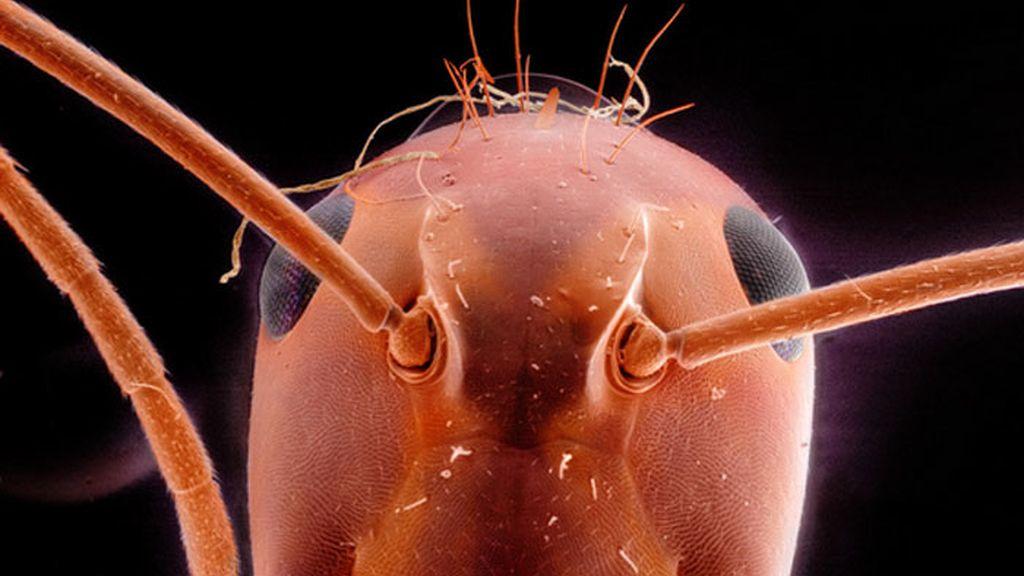 Daniel Kariko retrata la fauna microscópica que vive en nuestras casas