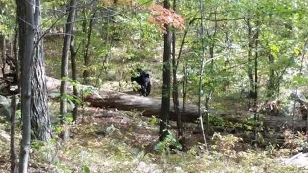 Momento antes al ataque de un oso