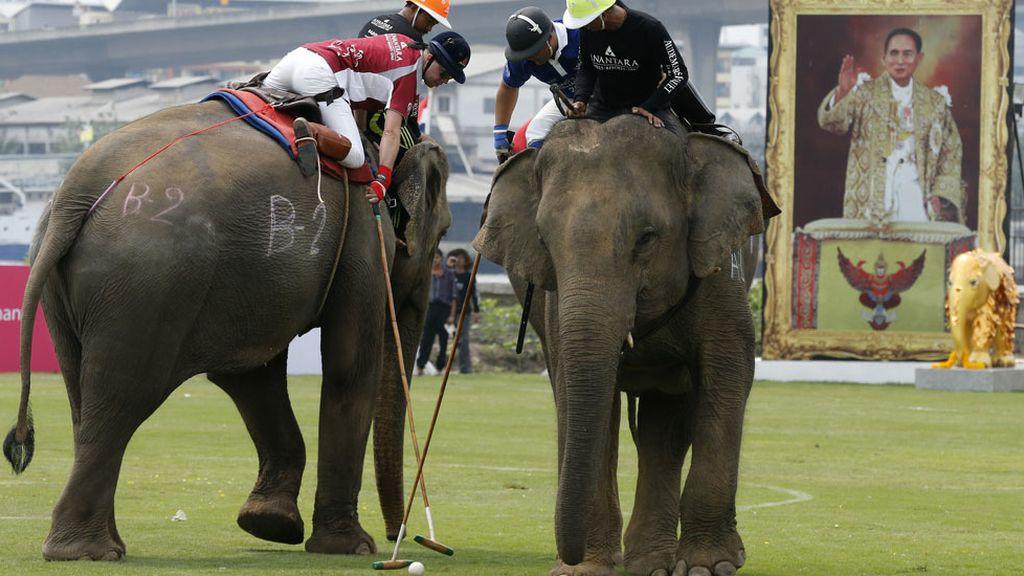 Tailandia celebra su particular Torneo de Polo sobre elefantes (10/03/2016)