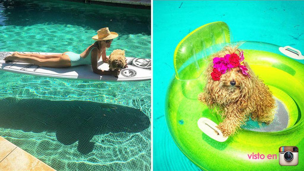Aunque las reinas del piscineo perruno son las perritas de Bibiana Fernández