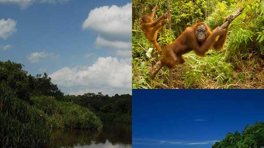 Bosque de Borneo: Lleno de vida