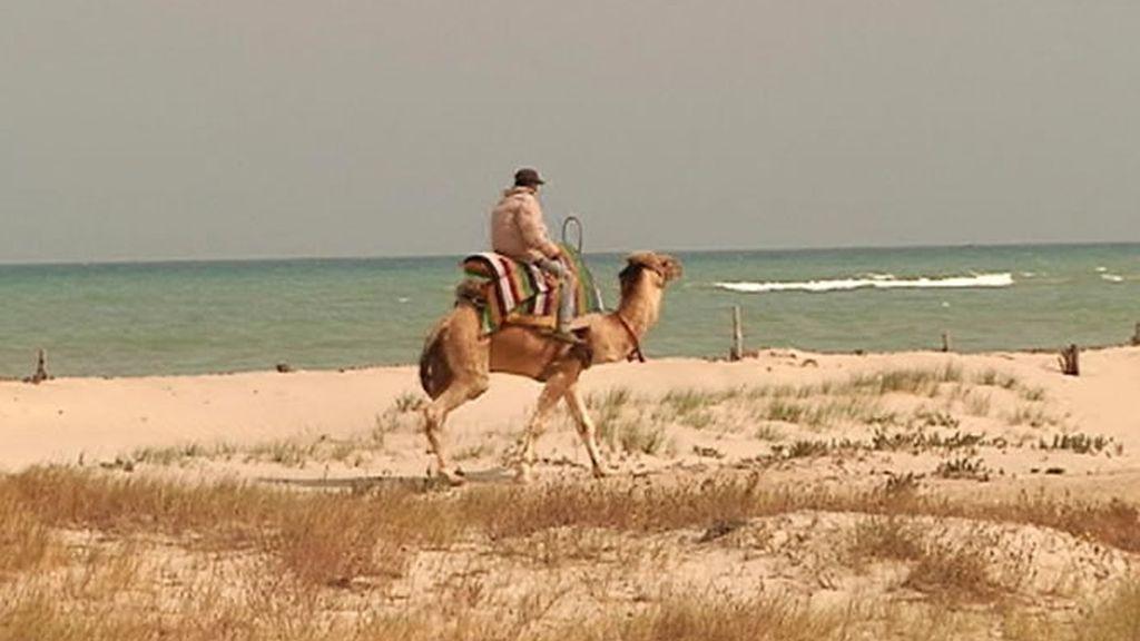 Camello y playa