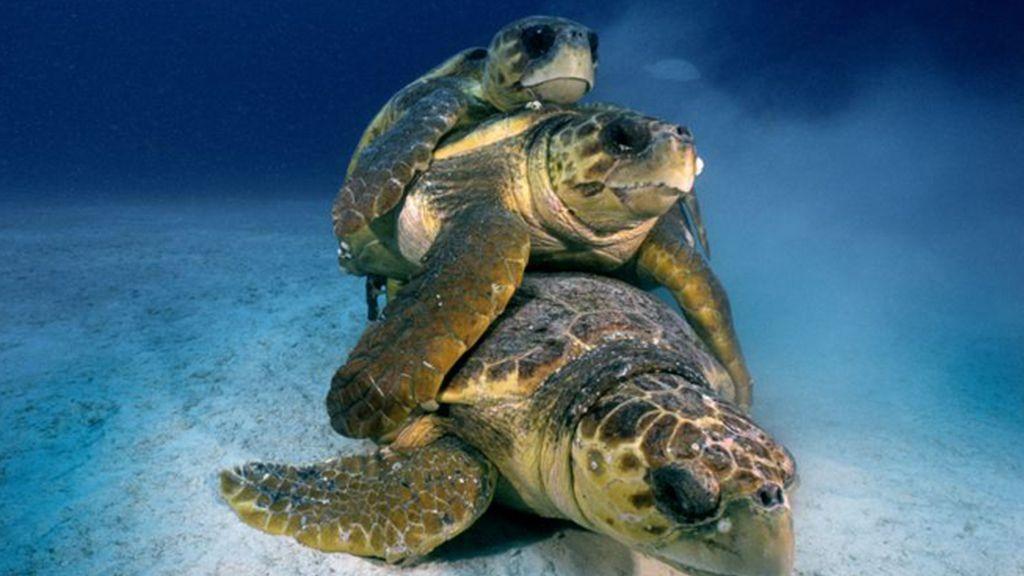 Familia de tortugas en Florida, Estados Unidos