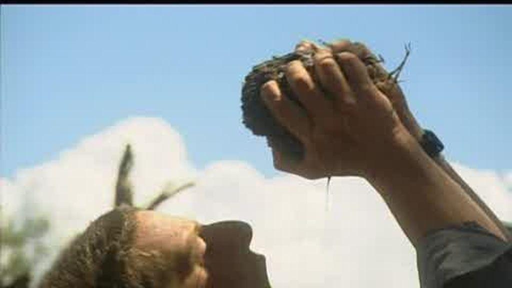Sabana africana: ¿qué puedes beber cuando no tienes agua?