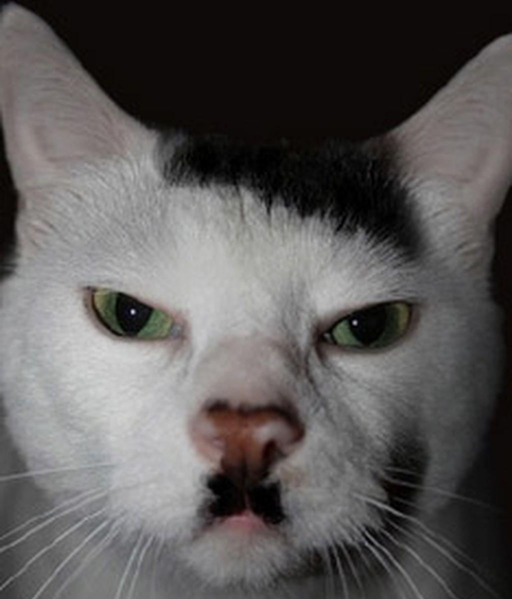 Gatos famosos por su genética