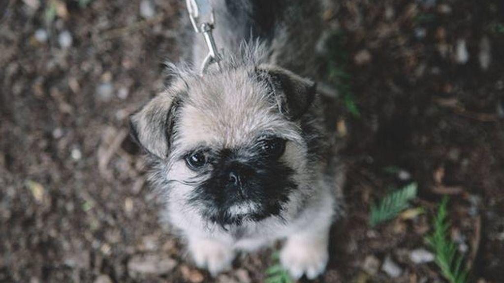 Devuelven un cachorro robado gracias a una campaña en Facebook