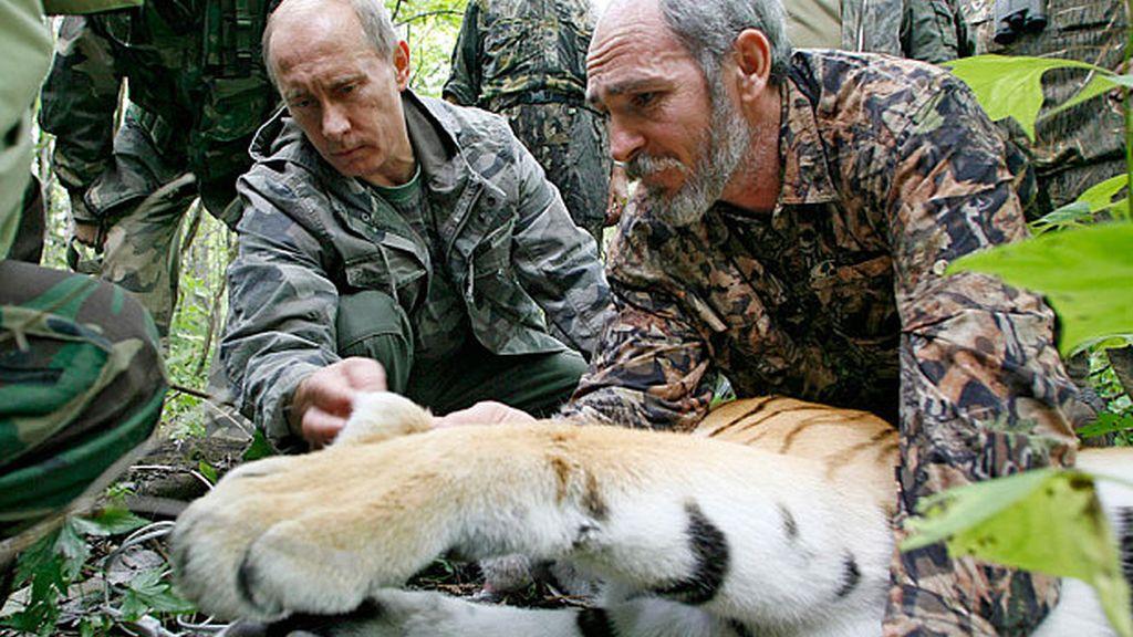 Uno de los tigres siberianos de Putin es sorprendido comiéndose un perro en China