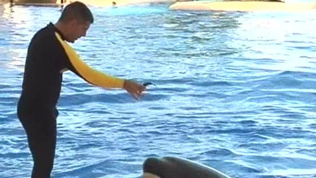 Piscinas: Orca ocean