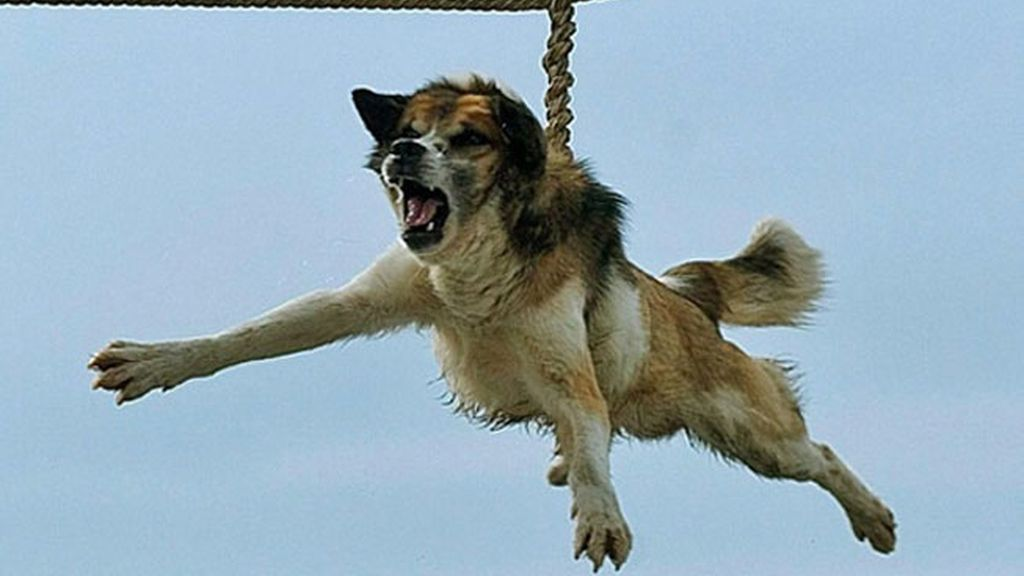 El ritual búlgaro del 'giro del perro' escandaliza al mundo