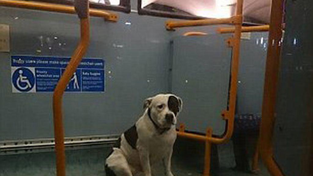 Perro perdido en autobús de Londres