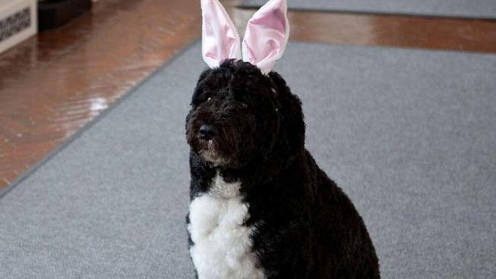 Así felicita Obama la Pascua