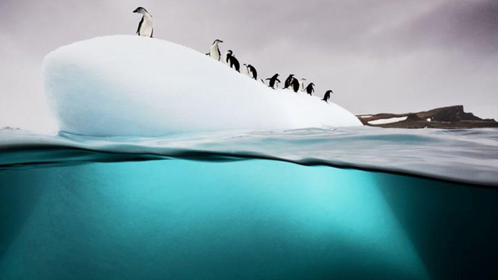 Pingüinos en la isla Danko en la península antártica
