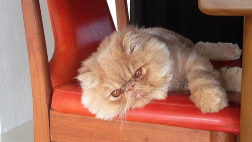 Un gato con una cara muy especial