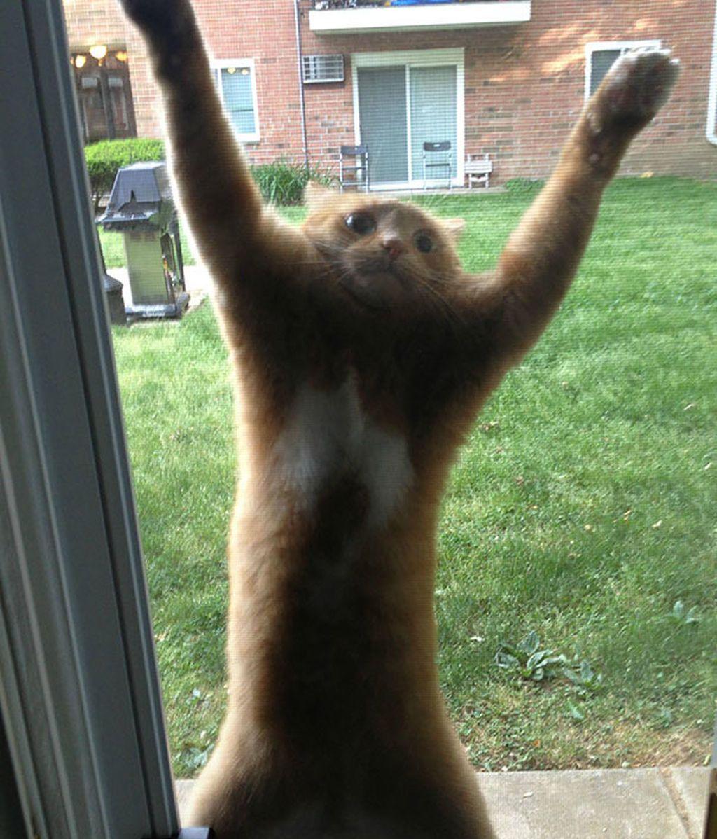 Este gatito necesita ayuda