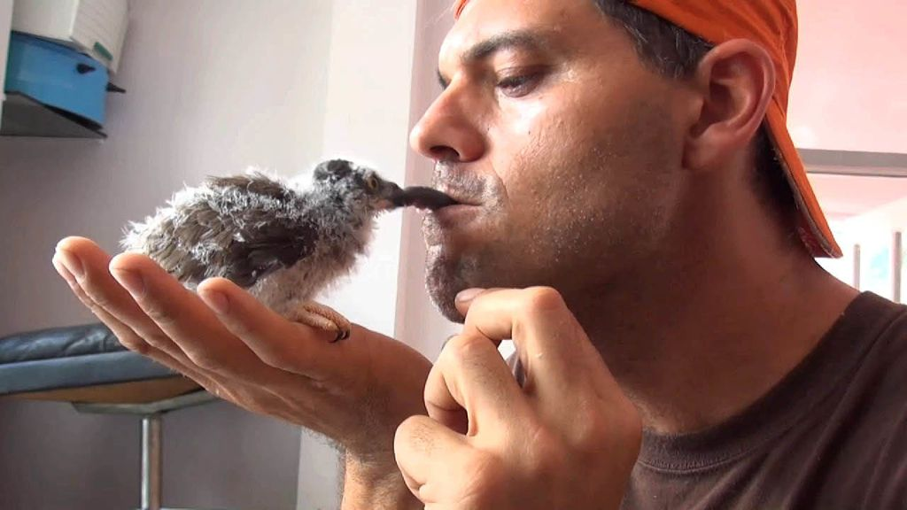 Frank Cuesta muestra su lado más divertido y loco en 'Natural Frank'